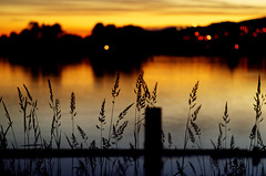 June (Kristian Francke) Tags: sunset river water outdoors bokeh dof depthoffield color colorful yellow blue silhouette pentax helios bc canada british columbia nature grass plant plants dark