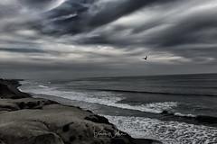 Soaring through the drama! (Arizphotodude) Tags: ocean waves california beach surf seabird clouds iphonepic westcoast landscape nature outdoors drama