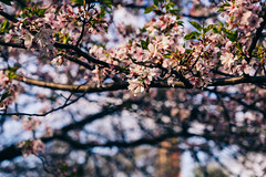 Love spring, when everything comes to life (RomanK Photography) Tags: centralpark landscape manhattan nyc newyorkcity blooming flowers nature sonyalpha spring