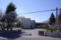 It's fine. Cherry blossom is now in full bloom. (fukapon) Tags: tweet 弘前 hirosaki 青森 aomori sghs frommywindow k3 hd pentax da 21mm f32 hdpda21mmf32al