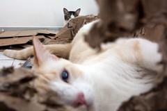 Nas caixas... (felipe sahd) Tags: gatos felinos cats city cidade fortaleza ceará brasil nordeste litoralnordestino