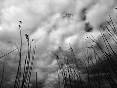 in search of better days (vfrgk) Tags: tallgrass sky outdoors field lookup cloudy clouds cloudysky cloudporn cloudscape weeds monochrome bw blackandwhite