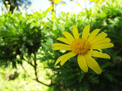 Fabiola (dan95_Zambrano) Tags: flor belleza juventud familia natural naturaleza amarillo verde armonia colores vida