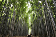 Kyoto Bamboo Forest (Eric Cooper 1) Tags: kyoto bamboo forest japan trees