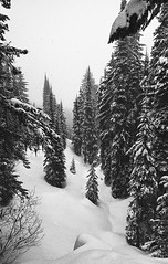 Snowy Trees on Record Ridge (JeffAmantea) Tags: trees tree snow snowing mountain mountains fog foggy scene calm serene serenity black white whiteblack ilford xp2 super 400 iso nikon fe2 nikkor 24mm 28 kootenay kootenays bc british columbia canada rossland range cascade skiing ski backcountry seven summits