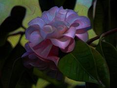 Dreaming by Moonlight (GeminEye27) Tags: deepdreamgenerator texture topazclean multiplyblend photoshop flower camellia
