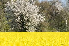 nature en fleurs