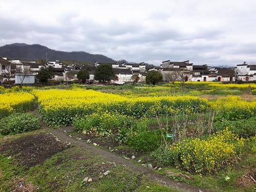 Fields near Xidi Village, 21.03.2017.