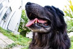20170509_06554401-Edit.jpg (Les_Stockton) Tags: canine dog pet beggs oklahoma unitedstates us