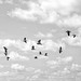 The Birds in Flight