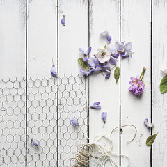Wisteria (Sylvia Houben) Tags: flowers blossoms wisteria quince rhododendron
