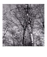 DIAP WOOD 003 (Dominiq db) Tags: diapo séries wood trees arbres forêt nature