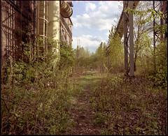Urban jungle. Chorzów Batory, Poland. (wojszyca) Tags: mamiya rz67 6x7 120 mediumformat 50mm kodak portra 160 gossen lunaprosbc epson v800 urban industrial decay overgrown vegetation ruins