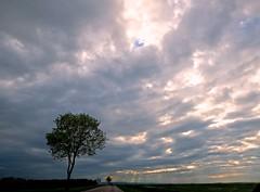 See the light (Max Sat) Tags: arbre bleu blue ciel cloud france landscape light lumière maxsat maxwellsaturnin nuage road route sky tree unexplored wideangle