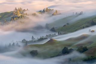 Fog Stream