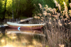 """""""quand on s'promène au bord de l'eau..."""" (Valentin le luron) Tags: 20170514 nikon 800 e vieuxrhône valais romandie suisse barque lumière contrejour eau roseaux paysage nature yves paudex lausanne"""