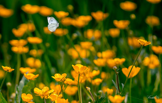 Wild flowers( Have a nice weekend) 野花(週末愉快)