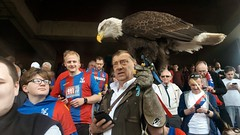 Kayla the Eagle, Selhurst Park, London (Paul-M-Wright) Tags: kayla bald eagle mascot crystal palace versus hull city premier league football match selhurst park london sunday 14 march 2017 soccer ground cpfc hcfc glove