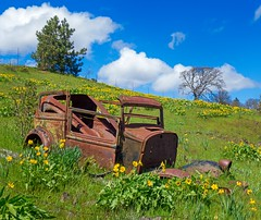 Rusty Car and Balsamroot 4634 B (jim.choate59 (away shooting)) Tags: decay rusty car rustycar hill balsamroot jchoate flowers sunny klickitatcounty washington green spring rust on1pics