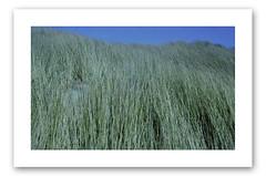 Dunes couleur (Franck Huet) Tags: dunes leica m3 summarit 50mm portra kodak 800asa couleur argentique argentic color picardie france baie somme quend plage beach oyat