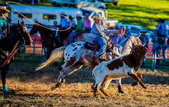 Two-against-one_DSC5641 (Mel Gray) Tags: dungogrodeo dungogrodeo2017 dungog newcastle hunterregion annualevent eastersaturday melgrayphotography cowboys cowgirls equestrianevents