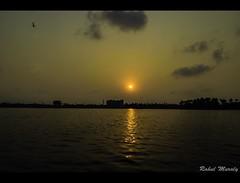 The golden reflections  #sunset #reflection #goldenskies #yellow #sun #clouds #bird #dusk #iamnikon #nikonclicks #nikonphotography #nikond3300 #tokina1116 #alleppey #alapuzha #punnamadalake #backwaters (rahulmuraly) Tags: sunset reflection goldenskies yellow sun clouds bird dusk iamnikon nikonclicks nikonphotography nikond3300 tokina1116 alleppey alapuzha punnamadalake backwaters