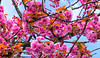Flowers (Akcan PhotoGraphy) Tags: flower çiçek hollanda netherlands pink pembe