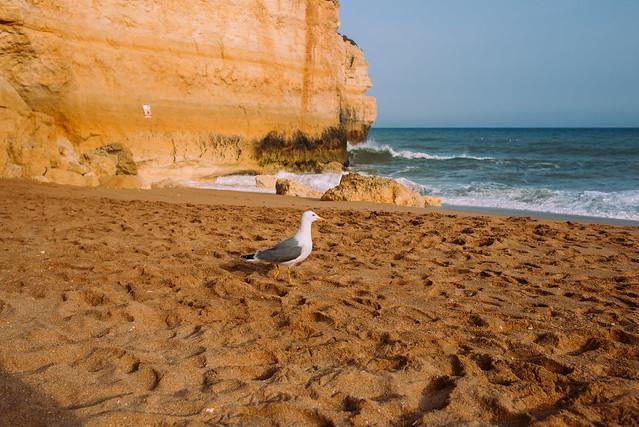 2017_04_10_Algarve_by_dobo_diana-40