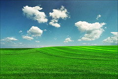 Green field (Katarina 2353) Tags: katarina2353 katarinastefanovic