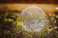 Soap Bubble #134/365 (A. Aleksandravičius) Tags: zenitmchelios40285mmf15 zenit helios helios402 old russianlens nikon nikond700 d700 85mm 365days 3652017 365 project365 134365 bokeh soap bubble sunset sun evening