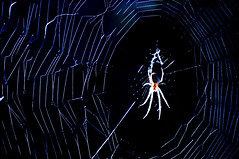 "Taken for the Macro Mondays theme of 'Into The Woods""  - HMM :-)) (Eggii) Tags: macromonday macroworld macro spiderweb spider web wood forest lighting light mood dark atmospheric walk intothewood"