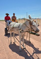 Travellers on the road heading north from Swokopmund to Damaraland. (One more shot Rog) Tags: road heading north from swokopmund damaraland etosha namibia travellers wagon donkeys donkey walvis travel africa horseandcart