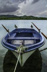 The duck boat (christian&alicia) Tags: banyoles catalunya catalonia catalogne estany llac lake nature landscape paisatge water boat duck nikon d7100 tamron 1750 nikond7100 tamron175028
