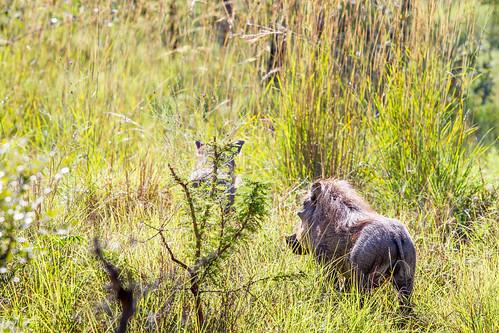 KrugerParkREIZ&HIGHRES-30