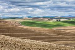 Endless Fields of The Palouse (David Recht) Tags: palouse colfax washington unitedstates fields wheat spring