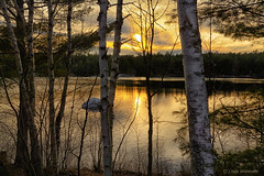 Evening Shadows (Lindaw9) Tags: evening sunset birch trees lake shanty bay treeline pinetrees shadows