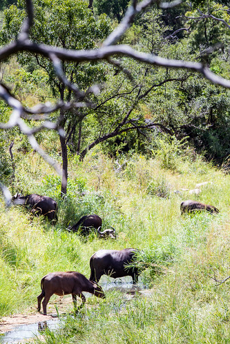 KrugerParkREIZ&HIGHRES-55
