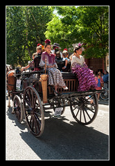 1019 exhibición de enganches en la plaza de toros de la real maestranza de caballería de sevilla (Pepe Gil Paradas.) Tags: exhibición de enganches en la plaza toros real maestranza caballería sevilla andalucia españa