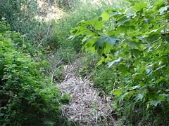 Ψίνθος (Psinthos.Net) Tags: ψίνθοσ psinthos spring april απρίλησ απρίλιοσ άνοιξη φύση εξοχή nature countryside afternoon απόγευμα απόγευμαάνοιξησ ανοιξιάτικοαπόγευμα psinthosvalley valley κοιλάδα κοιλάδαψίνθου κοιλάδαψίνθοσ πρασινάδα greenery βάτοσ βάτοι βάτα brambles bramble reeds καλάμια μονοπάτι path branches κλαδιά άγριαλουλούδια αγριολούλουδα wildflowers flowers λουλούδια seeds σπόροι yellowflowers κίτριναλουλούδια άνθη blossoms yellowblossoms κίτριναάνθη tree πλάτανοσ planetree greens χόρτα