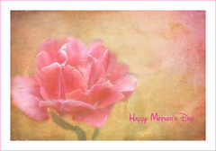 Mothers.... (Patlees) Tags: flower mothersday textured thanks flypaper lenabemanna evelyn flint