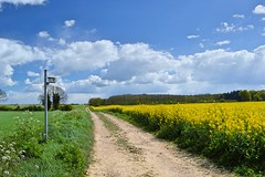 Afternoon walk (braddalad123) Tags: outdoor landscape cloud clouds track trail path field fields tree trees tranquil rapeseed flowers beautiful nature sign signpost sky blue yellow white nikon d3200 1855mm