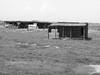 Abandoned sheepfold (Nikos Karatolos) Tags: kalochori thessaloniki delta axiou greece mussel houses abandoned samyang 50mm f12