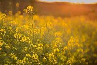 Luz primaveral