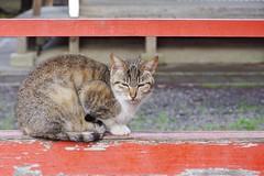 Today's Cat@2017-04-27 (masatsu) Tags: cat thebiggestgroupwithonlycats catspotting pentax mx1