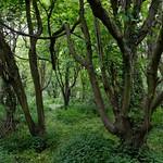 Manor Road Woods thumbnail