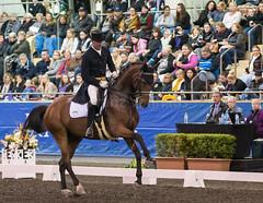 17429_Sydney_CDI_GPFS_0134.jpg (FranzVenhaus) Tags: athletes dressage australia equestrian riders horses ponies rug siec nsw sydney newsouthwales aus