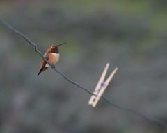 IMGP4458b (forfiv) Tags: digital color pentaxkx tamron28200mm hummingbird bird grandcoulee wa
