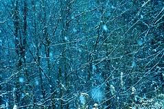 Snowfall (georgekorunov) Tags: forest snowfall trees snow outdoor nature precipitation branches
