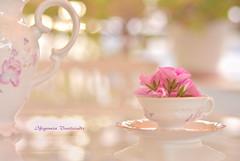 Let's have some tea... (Ifigeneia Vasileiadis) Tags: teacup teapot veranda lifestyle bright vibrant closeup nikond7200 bokeh flowers pink vintage romantic