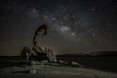 The Scorpion (KrissyM_77) Tags: anza night borrega springs california state desert milkyway astrophotography longexposure stars scorpion statues